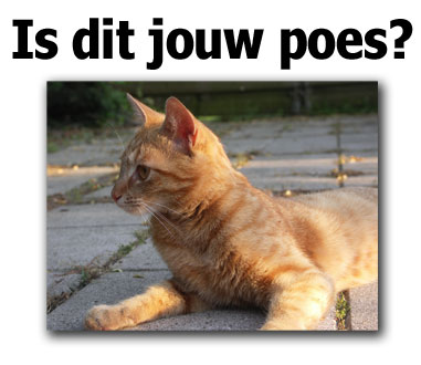 Is dit jouw poes? poster