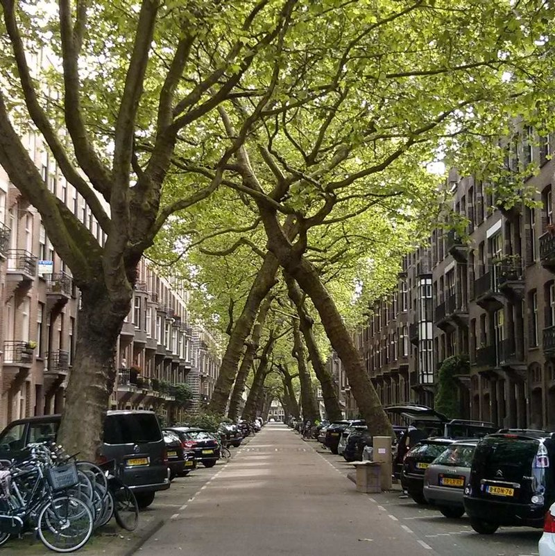 leaning trees of lomanstraat