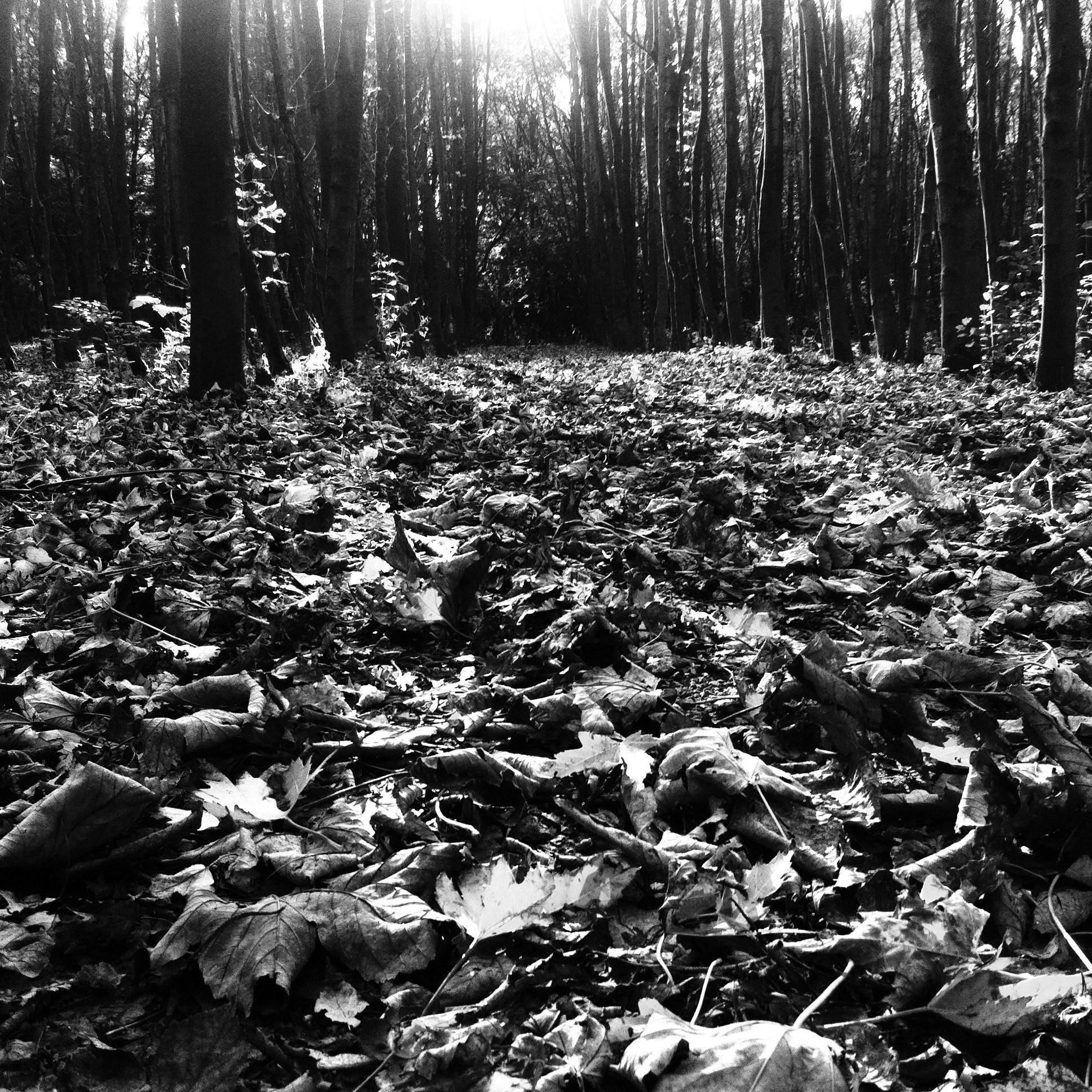 Twiske leaves